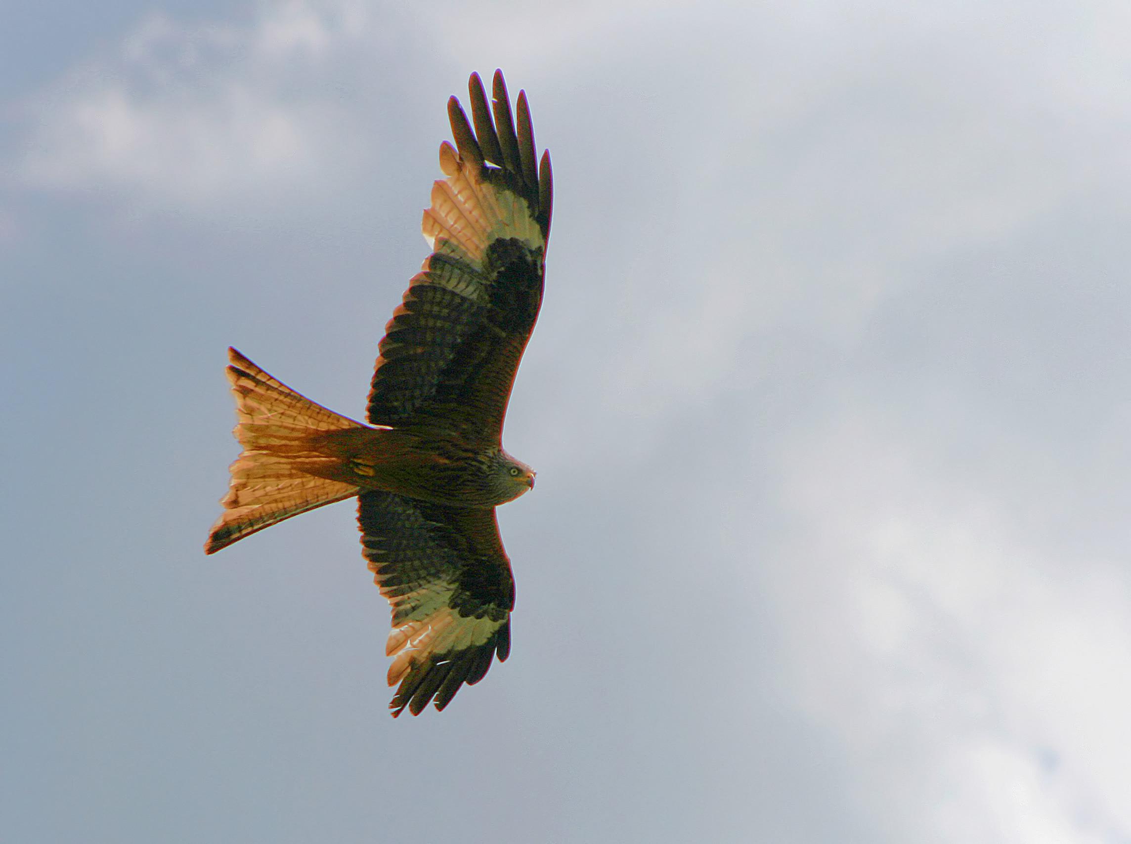 Birds In Detail